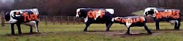 Concrete cows of Milton Keynes