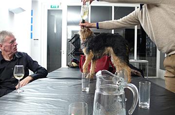 hond-aan-drank.jpg