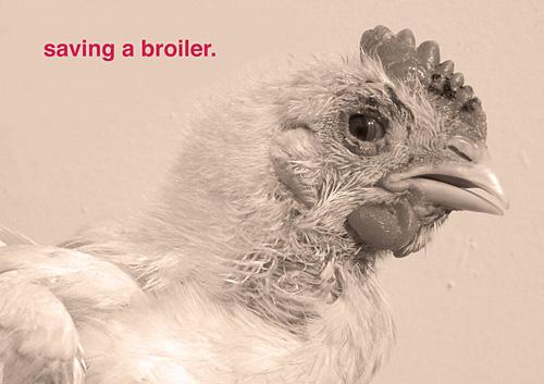 Tinkebell, Saving a Broiler