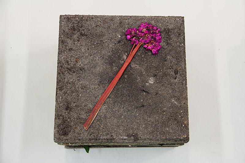 Herbarium #1_3