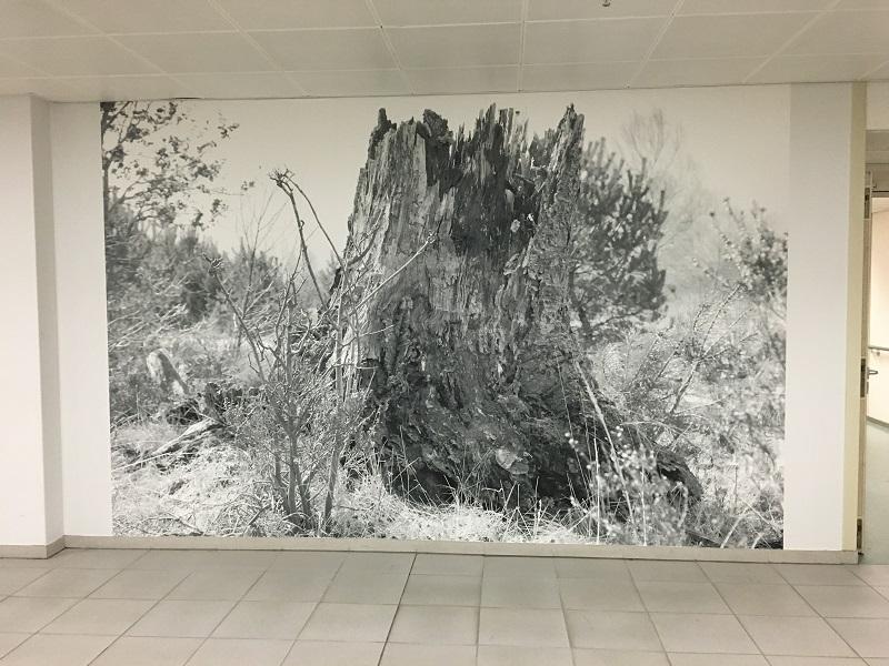 Erik Odijk: Healing environment
