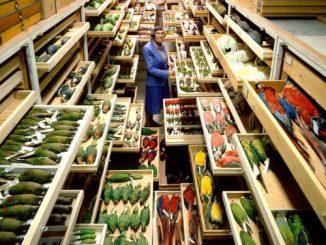 In de archieven van het Smithsonian